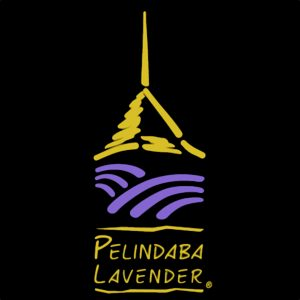Pelindaba Lavender